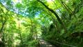 大阪 箕面川の新緑 78881272