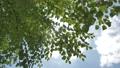 新緑の季節 79235284