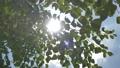 新緑の季節 79235285