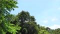 初夏のイメージ 79235286