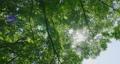 foliage, leaf, leafs 80245601