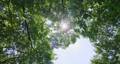 foliage, leaf, leafs 80245602