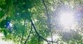 foliage, leaf, leafs 80245604