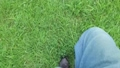 緑の草むらを歩くジーンズを穿いた男性の足元。 80268726