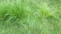 緑の草むらを歩く。 80268730