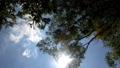 速く回転するローアングルの木々の枝葉と木漏れ日が眩しい青空。 80268733