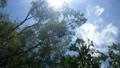 速く回転するローアングルの木々の枝葉と木漏れ日が眩しい青空。 80268738