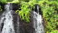 Summer cool, Taro Waterfall, Tsuru City, Yamanashi Prefecture 80819226