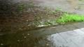 シトシトと降る雨に濡れる土と舗装の地面と水たまり 81096783