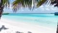 The coastline of the ocean. Maldives, June 2021  81182814