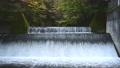 尚仁沢湧水群で見た紅葉に囲まれた堰の情景@栃木 81187596