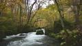 ちょうど見頃の紅葉に囲まれた奥入瀬渓流「阿修羅の流れ」の情景@青森 81236342