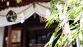 若々しい葉と背景に亀戸香取神社 81471247