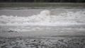 氾濫危険水位 81479131