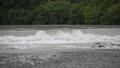 氾濫危険水位 81482360