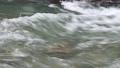 秋川渓谷の川の水 81820612