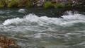 秋川渓谷の川の水 81820615