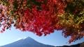 秋の紅葉と富士山 81822216