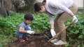 サツマイモを収穫する親子 81987413