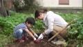 サツマイモを収穫する親子 81987415