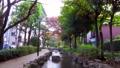 東京江戸川区の都市風景 小松川境川 親水公園 82025260