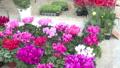 お花屋さんにあるお花を撮影 82034664