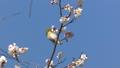 花の蜜をつつく野鳥を撮影 82034968