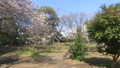 春の屋外撮影 82035602