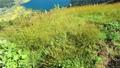 小熊山から木崎湖の眺め(9月) 82118488