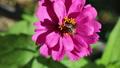 벌과 꽃 82154397