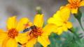 꽃과 벌 82154920