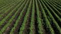 A vast field where many crops are planted, aerial view, rural scenery 82181496