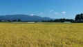 Autumn rice harvesting work scenery aerial photography agriculture Akita prefecture vast rural scenery 82186900