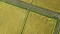Autumn rice harvesting work scenery aerial photography agriculture Akita prefecture vast rural scenery 82186902