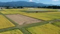 Autumn rice harvesting work scenery aerial photography agriculture Akita prefecture vast rural scenery 82186905