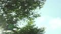 木漏れ日 82221158