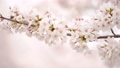 桜 春イメージ 82222253