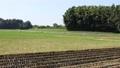 鄉村景觀 郊區 農村灌木叢 農業用地 稻田 農業地區 櫪木晴朗 82756967