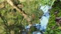 お寺の池を漂う金魚 82817389