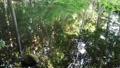 鳥の声が響く池の風景 82817492
