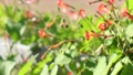 鮮花,橙子,紅色,盛開的常春藤,藤蔓,綠色 82852779