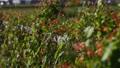 鮮花,橙子,紅色,盛開的常春藤,藤蔓,綠色 82852781