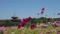 【奈良県】秋桜が美しい法起寺の風景 82854807