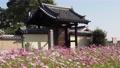 【奈良県】秋桜が美しい法起寺の風景 82854808