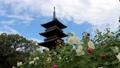 四国霊場第70番札所「本山寺」五重塔と芙蓉の花 82916436