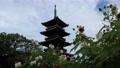 四国霊場第70番札所「本山寺」五重塔と芙蓉の花 82916438