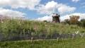 コスモスが咲き風車が回る光景 83113748