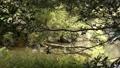 湖面に朽ちた倒木のある喧噪的な風景 83174661
