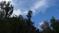 森の上を別の気流に乗って行きかう雲 83174662