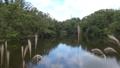 空を映す水面にススキが揺れる秋景色 83174665